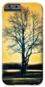 Leafless Tree iPhone Case by Jutta Maria Pusl