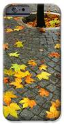 Leafs in Ground iPhone Case by Carlos Caetano