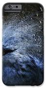 Ornamental Nature iPhone Case by Andrew Paranavitana