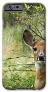 Peek A Boo iPhone Case by Ernie Echols