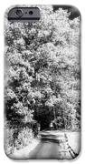 Piney Road iPhone Case by John Rizzuto