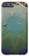 Planktonic Diatom Alga, Sem iPhone Case by Steve Gschmeissner