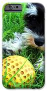 Playing in the Green Grass iPhone Case by Tisha McGee