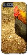 Rooster farm iPhone Case by Yvon van der Wijk