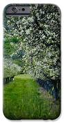 Springtime in the Orchard II iPhone Case by Bill Gallagher