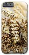 Wheat ears and grain iPhone Case by Elena Elisseeva