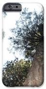 Yosemite Skyline iPhone Case by REMEGIO ONIA