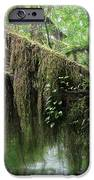 Hall of Mosses - Hoh Rain Forest Olympic National Park WA USA iPhone Case by Christine Till