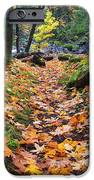 Autumn Path iPhone Case by Mike  Dawson