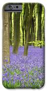 Bluebells iPhone Case by Jane Rix