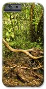 Branching Out In Costa Rica iPhone Case by Madeline Ellis