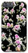 Coral spawning  iPhone Case by Lanjee Chee