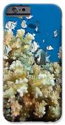 Damselfish Among Coral iPhone Case by Dave Fleetham - Printscapes