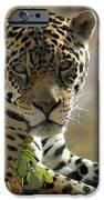 Gorgeous Jaguar iPhone Case by Sabrina L Ryan