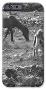Grazing iPhone Case by Michael Peychich