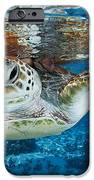 Green Turtle iPhone Case by Alexis Rosenfeld