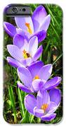 Honeybee working Crocus iPhone Case by Thomas R Fletcher