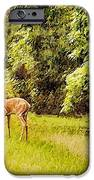 Late Summer Deer iPhone Case by Jan Amiss Photography