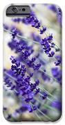 Lavender Blue iPhone Case by Frank Tschakert