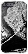 Leaf iPhone Case by Jera Sky