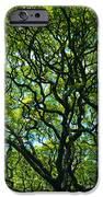 Monkeypod Canopy iPhone Case by Peter French - Printscapes
