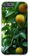 Orange Tree iPhone Case by Lorraine Devon Wilke