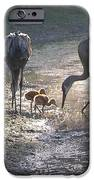 Sandhill Crane Family in Morning Sunshine iPhone Case by Carol Groenen
