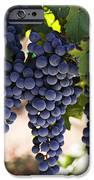 Sauvignon grapes iPhone Case by Garry Gay