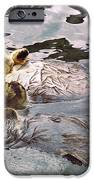 Sea Otters Holding Hands iPhone Case by BuffaloWorks Photography
