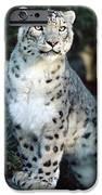 Snow Leopard Uncia Uncia Portrait iPhone Case by Gerry Ellis