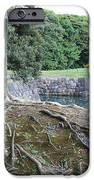 Strong Roots in Japan iPhone Case by Carol Groenen