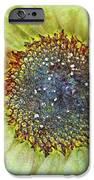 The Sunflower iPhone Case by Tara Turner