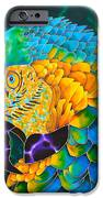 Turquoise Gold Macaw  iPhone Case by Daniel Jean-Baptiste