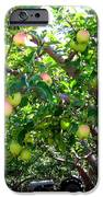 Vintage Tractor In Apple Orchard iPhone Case by Will Borden