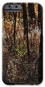 Woods - 2 iPhone Case by Linda Knorr Shafer