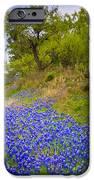 Bluebonnet Meadow IPhone Case by Inge Johnsson