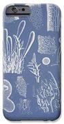 Ceratodictyon Spongiosum Zanard IPhone Case by Aged Pixel