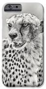 Cheetah IPhone Case by Adam Romanowicz