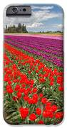 Colorful Field Of Tulips IPhone Case by Pierre Leclerc Photography