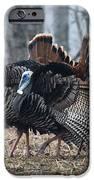 Jake Eastern Wild Turkeys IPhone Case by Linda Freshwaters Arndt