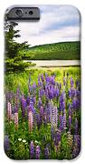 Lupin Flowers In Newfoundland IPhone Case by Elena Elisseeva
