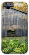 Old Tobacco Barn IPhone Case by Brian Jannsen