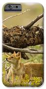 Rascals IPhone Case by Aaron Whittemore