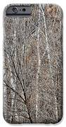 Winter Forest IPhone Case by Elena Elisseeva