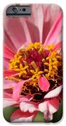 Zinnia From The Whirlygig Mix IPhone Case by J McCombie