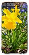 Spring Wildflowers IPhone Case by Elena Elisseeva