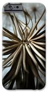 Dandelion IPhone Case by Stelios Kleanthous