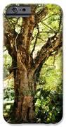 Kingdom Of The Trees. Peradeniya Botanical Garden. Sri Lanka IPhone Case by Jenny Rainbow