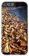 Ussurian Taiga Autumn IPhone Case by Anonymous