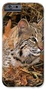 611000006 Bobcat Felis Rufus Wildlife Rescue IPhone Case by Dave Welling